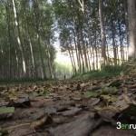 En otoño el camino se llena de hojas de los chopos