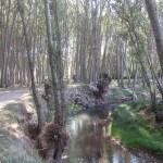 La pista discurre junto al rio