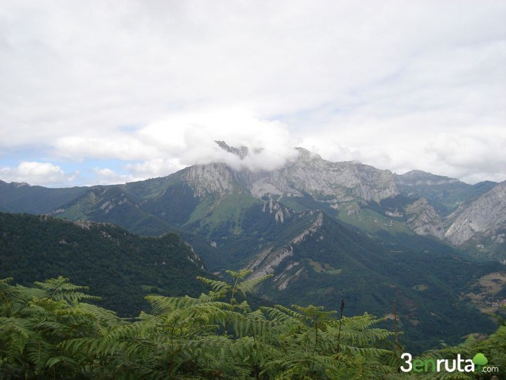 El bosque de Peloño – Asturias