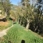 Camino que tomamos por detrás del Mas de la Sarga de Baix