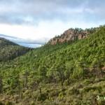 Frondosos bosques de pino rodeno