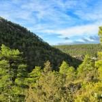 Vista de los pinares