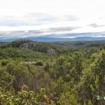Los pinares se extienden hasta donde nos alcanza la vista
