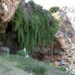 Yedra en la roca de la cueva