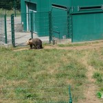 Los osos Paca y Tola