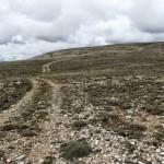Camino de subida a la Ermita de Santa Quiteria