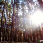 El bosque es espectacular