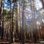 Hay tantos árboles que apenas existe sotobosque