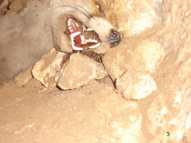 Cova del Moro – Cova de la Dona (Turballos)