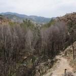 Senda desde las cuevas del montecico al cauce el rio
