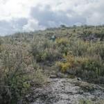 Subiendo a la loma encima del Barranc de les Coves