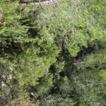 Vegetación en el sendero de subida