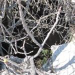 Boca de la sima de la Cova de la Dona - Turballos