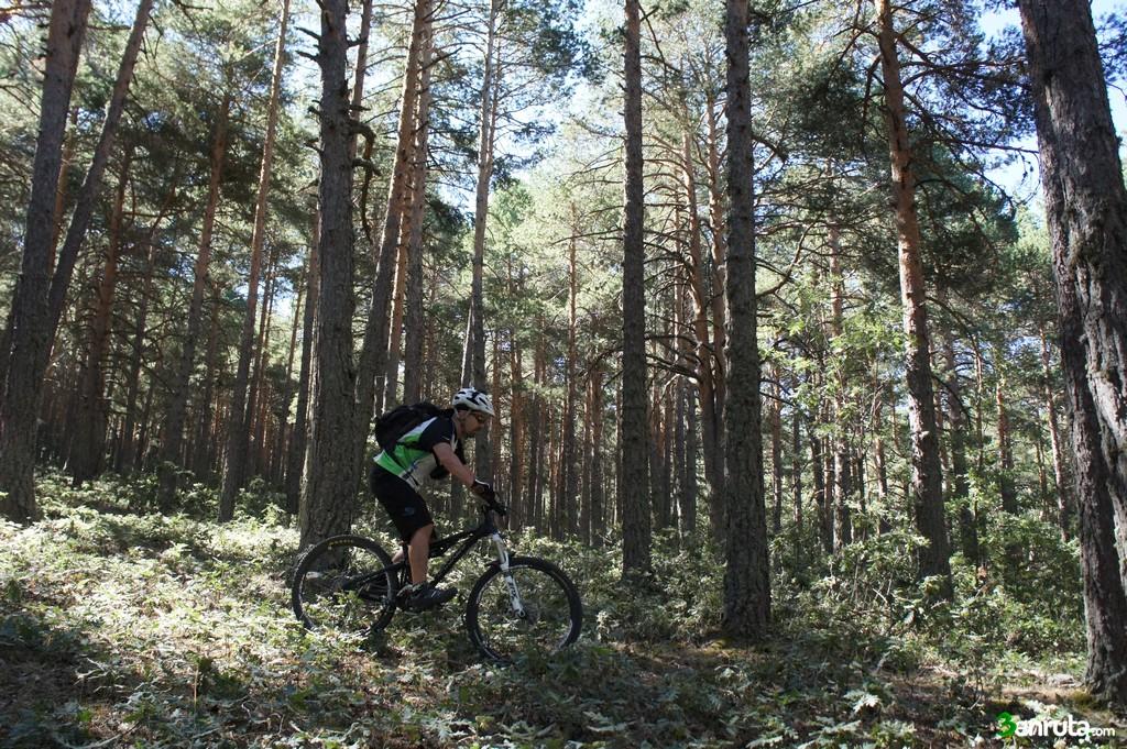 El tramo de bosque es espectacular