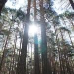 Magnificos bosques nos acompañan durante toda la ruta