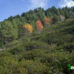 Bosque de Campeà