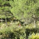Senda entre los pinos