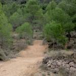 Futuro tramo del Bikepark de la Safranera
