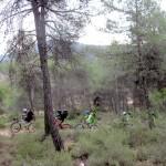 Camino del Mas del Palomaret