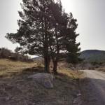 Pista ancha hacia el merendero del pinar