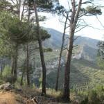Vistas desde el camino a la Casa Forestal de les Planissies