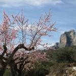 El Benicadell y almendros en flor