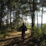 Siempre rodamos entre el bosque de pinos