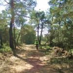 La ruta siempre nos lleva por el bosque