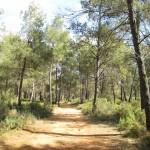 La ruta de btt siempre entre las pinadas