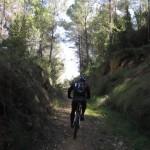 Tramo de senda entre las pinadas