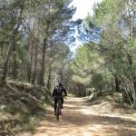 La pista transcurre entre un bonito bosque de pino