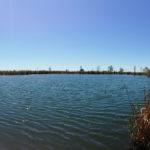 Siempre caminamos junto al estanque