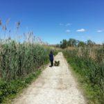 Camino entre cañares