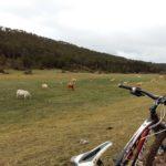 Empieza a cambiar el paisje y encontramos las primeras vacas
