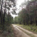 Caminio a La Salobreja