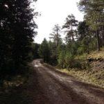 El camino cada vez es más bonito