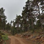 La pista transcurre junto a un bonito bosque