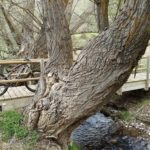 Senda fluvial del Rio Camarena
