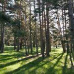 El contraste del verde con el espeso bosque es magnifico