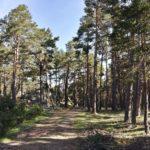 La pista siempre circula entre preciosos bosques de pino