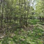 Bajada por el GR perdido entre la vegetación