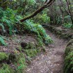 El inicio del sendero es cara arriba con un buendesnivel