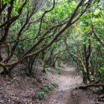 El sendero del Pijarral