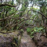 Las ramas y troncos de los arbustos se entrelazan sobre nuestras cabezas