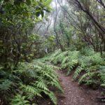 Es un placer caminar por el sendero del Pijarral