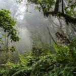La niebla y la lluvia horizontal le dan un aspecto encantador