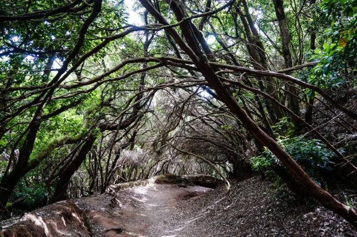 El Sendero de los Sentidos – Parque Rural de Anaga