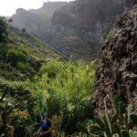 Iniciamos el descenso hacia el fondo del barranco