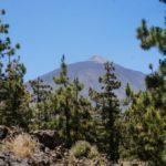 Vista del Teide desde la Corona forestal