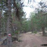 Seguimos pedalendo por pista entre los pinos albares